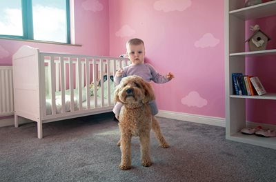 1 year old ridding tan dog like horse in pink nursery (is photoshopped)